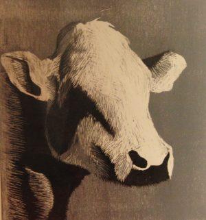 Houtsnede van een koe zonder hoorns. Zwart wit en grijs gekleurd. Gemaakt door Gabriëlle Westra